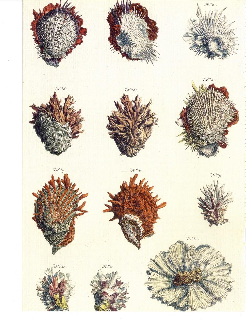 Seba. Cabinet of Natural Curiosities - Not available - TASCHEN Books